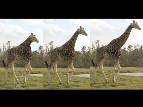 Lamarck is Alive and Well and Living in Language | World