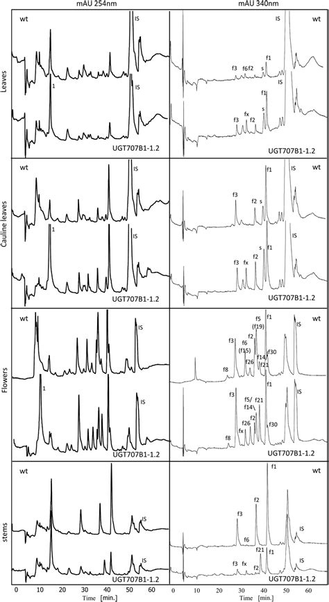 Characterization of a Glucosyltransferase Enzyme Involved