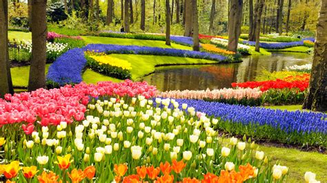Keukenhof, A Haven of Tulips in Amsterdam, The Netherlands