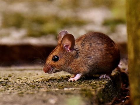 Get the current position of the mouse from a JavaScript