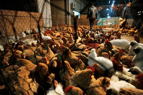 Chicken prices drop, supply slashed in some markets amid