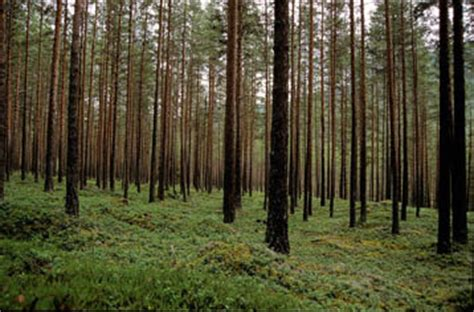 New satellite observations reveal link between forests and