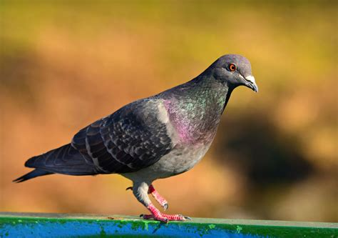 Ultimate State Guide to Dove Hunting Laws - International