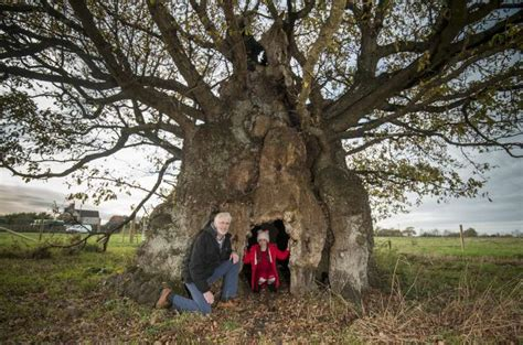 Ancient oak saved from the chop! | Agg-Net